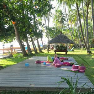 plancher bois palmiers jardin